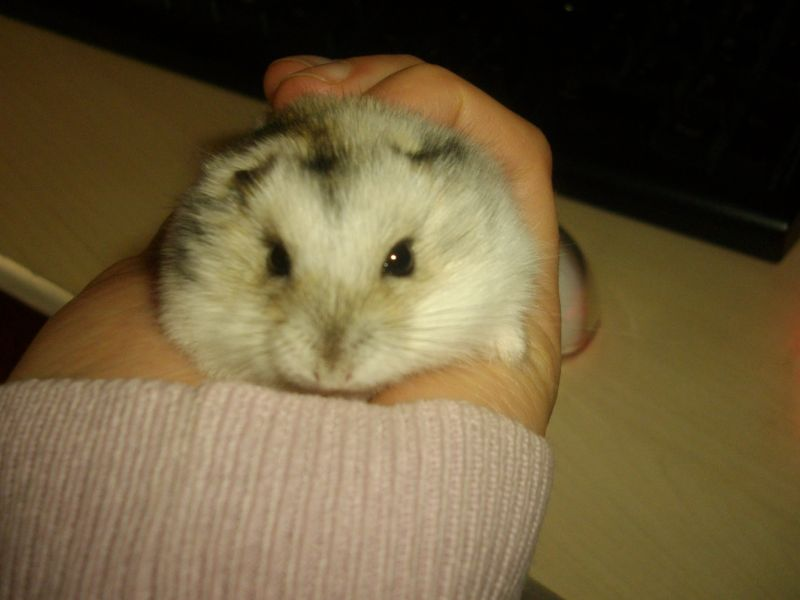 hamster024.jpg