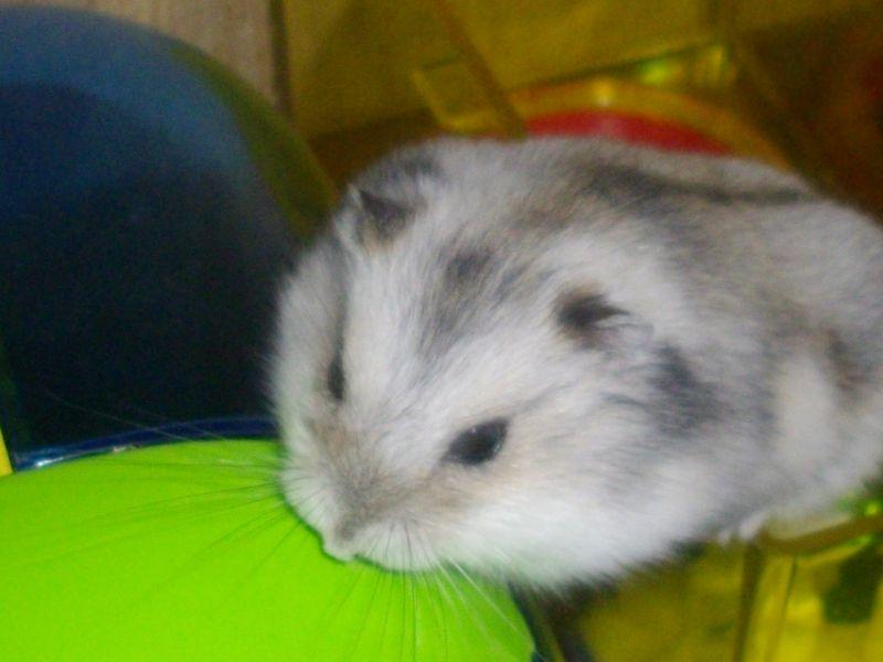 hamster049.jpg