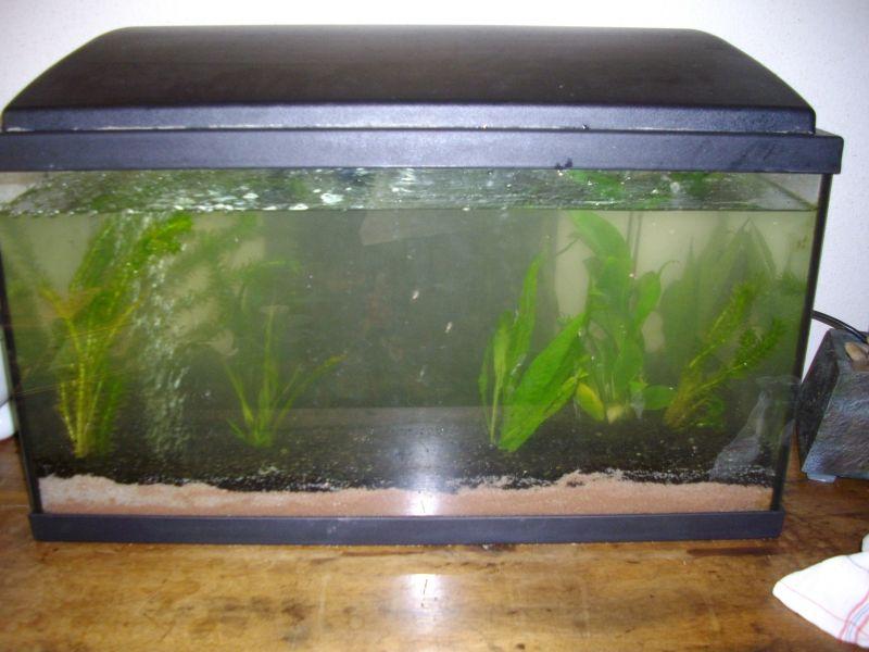 aquarium012.jpg