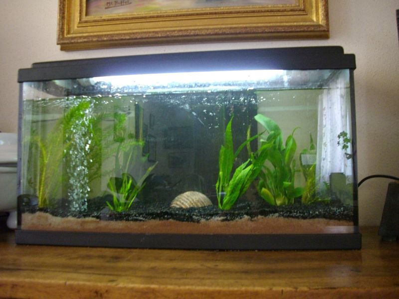 aquarium016.jpg