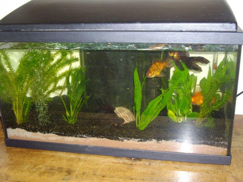 aquarium021.jpg