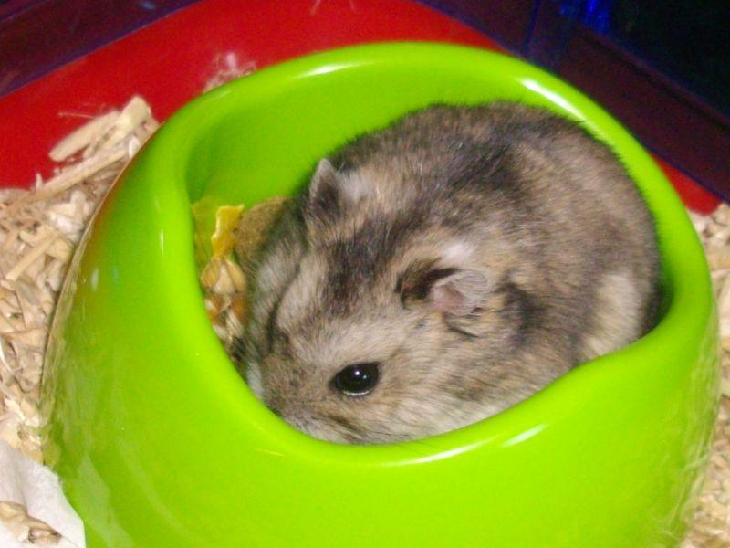 hamsteretcerise018.jpg